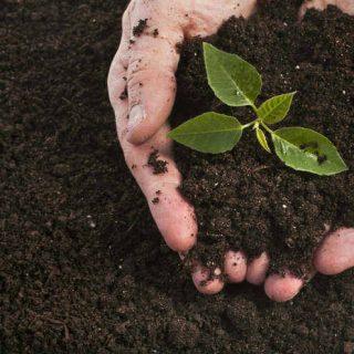 Nuestra salud empieza en el suelo