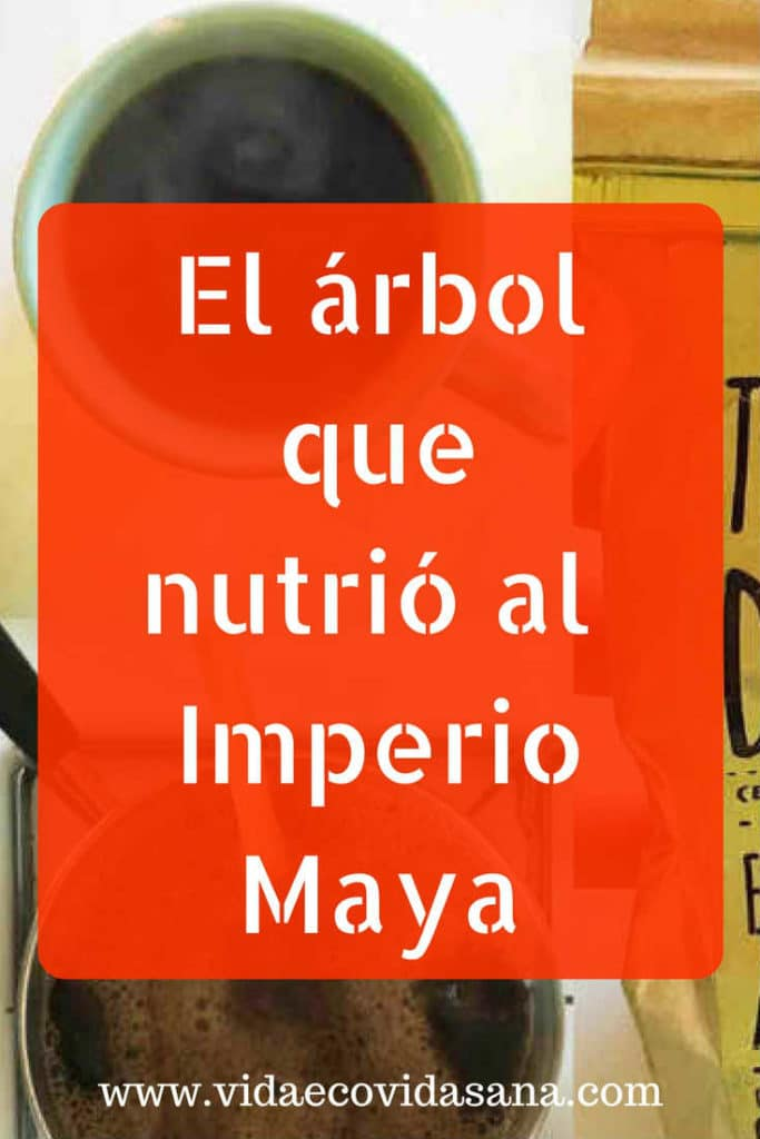 arbo-nutrio-imperio-maya-nuez-ramon-pinterest