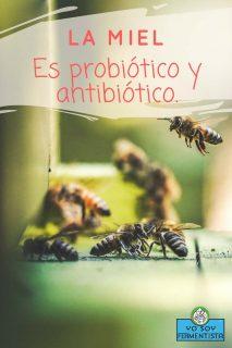 miel-probiotico-antibiotico-pinterest