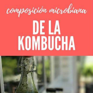 composicion-microbiana-de-la-kombucha-que-es-pinterest