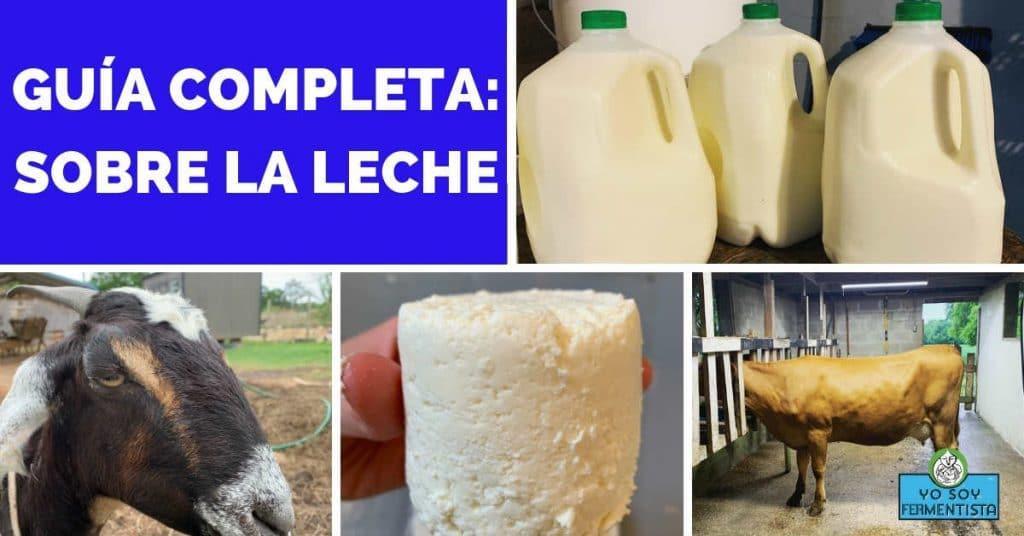 guia completa lacteos leche