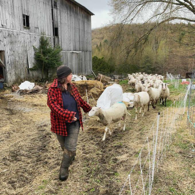 leche cruda bronca ovejas