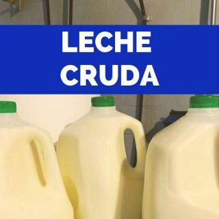¿Cómo sé si la leche cruda (bronca) es segura para usar?